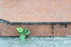 Los pequeños árboles verdes en la acera de piedra roja Fotos de archivo