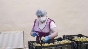 Los pequeños anadones se vacunan para la salud almacen de video