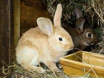 Los pequeños conejitos están comiendo imagen de archivo