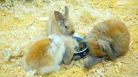Los pequeños conejos comen y se divierten almacen de metraje de vídeo