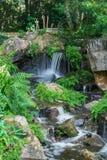 Los pequeños funcionamientos de la cascada y rocas del golpe con las plantas y los helechos Imagen de archivo libre de regalías