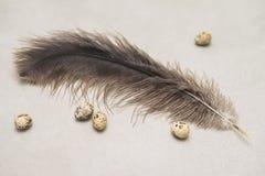Los pequeños huevos de codornices y la avestruz grande empluman, entonado El concepto para Pascua, alimento biológico, adietando, Imagen de archivo