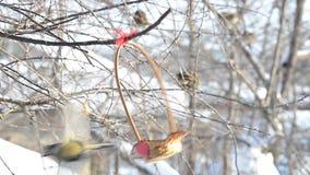 Los pequeños pájaros picotean las semillas de una cesta adornada con el corazón Foco selectivo almacen de metraje de vídeo