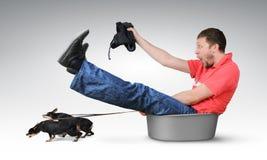 Los pequeños perros tiran del hombre en un lavabo, concepto del humor fotos de archivo