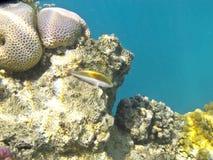 Los pequeños pescados Fotos de archivo libres de regalías