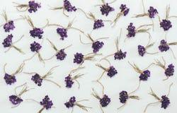 Los pequeños ramos de bosque fragante florecen el fondo del blanco de las violetas foto de archivo