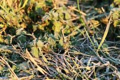 Los pequeños troncos hermosos de la hierba crecen en campo Imagenes de archivo