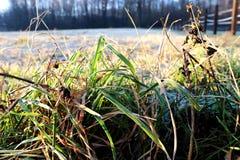 Los pequeños troncos hermosos de la hierba crecen en campo Imagen de archivo