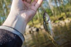 los pequeños pescados superan en la mano en orilla Foto de archivo libre de regalías