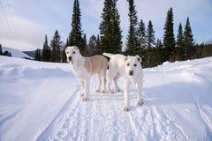 Los perritos de Alabai se colocan en el fondo del bosque, 4 meses Imagenes de archivo