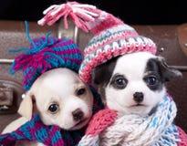 los perritos juntan llevar un sombrero de punto Fotografía de archivo