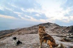 Los perros del trekker foto de archivo libre de regalías