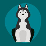 Los perros esquimales divertidos de la historieta persiguen el ejemplo negro del pan blanco del carácter en perrito feliz de la h Imagen de archivo libre de regalías