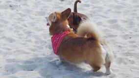 Los perros juegan al aire libre
