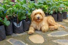 Los perros perdidos de Brown se sientan en el piso del ladrillo en el parque foto de archivo