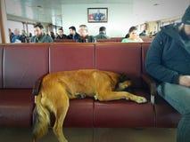 Los perros pueden colgar hacia fuera en la nave Imágenes de archivo libres de regalías