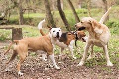 Los perros se están divirtiendo foto de archivo libre de regalías