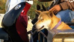Los perros se están sentando en un remolque de una motocicleta tailandesa con un cochecito asia almacen de video