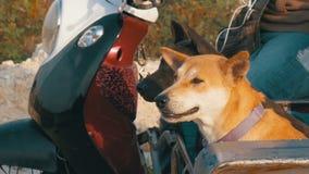 Los perros se están sentando en un remolque de una motocicleta tailandesa con un cochecito asia Cámara lenta almacen de video