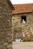 Los perros se juntan y otra ventana en la puerta principal Imagen de archivo libre de regalías