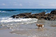 Los perros también tienen días de fiesta Fotografía de archivo libre de regalías