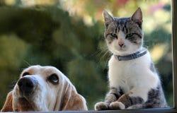 Los perros y los gatitos están mirando hacia fuera la ventana Imagen de archivo libre de regalías