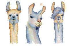 Los personajes de dibujos animados lindos de la llama fijaron el ejemplo de la acuarela, animales de la alpaca, estilo dibujado m ilustración del vector