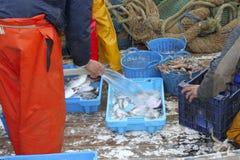 Los pescadores dan el retén de pescados de trabajo en cubierta de barco Fotos de archivo libres de regalías