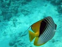 Los pescados Fotos de archivo libres de regalías