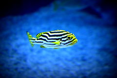 Los pescados Imagenes de archivo