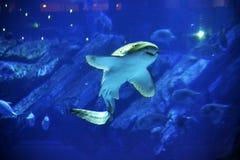 Los pescados Imagen de archivo
