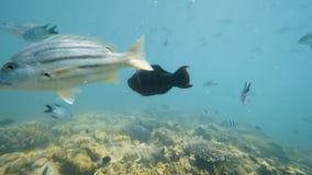 Los pescados acercan a los arrecifes de coral almacen de metraje de vídeo