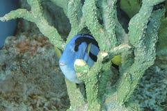 Los pescados azules Imagen de archivo