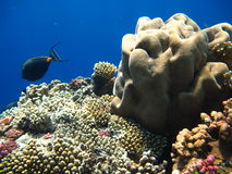 Los pescados azules Imagenes de archivo
