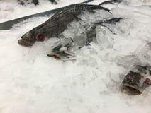 Los pescados congelados foto de archivo