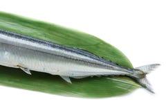 Los pescados crudos japoneses del saurio aislaron 3 imagen de archivo libre de regalías
