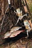 Los pescados de agua dulce y las cañas de pescar de cogida con la pesca aspan Imagenes de archivo