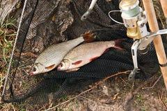 Los pescados de agua dulce y las cañas de pescar de cogida con la pesca aspan Fotos de archivo libres de regalías