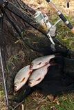Los pescados de agua dulce y las cañas de pescar de cogida con la pesca aspan Imágenes de archivo libres de regalías