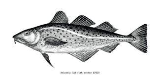 Los pescados de bacalao atlántico dan el ejemplo del grabado del vintage del dibujo stock de ilustración