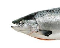 Los pescados de color salmón se cierran encima de aislado Foto de archivo