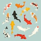 Los pescados de Koi vector la carpa japonesa del ejemplo y el koi oriental colorido en el sistema de Asia del pez de colores chin ilustración del vector