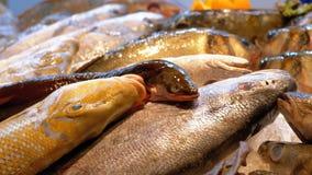 Los pescados de mar frescos, cangrejos, los diversos mariscos se venden en el contador de la tienda en la calle metrajes