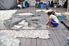 Los pescados de mar son secados en el sol por el trabajador imagen de archivo