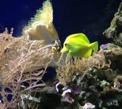 Los pescados de Nemo imagen de archivo