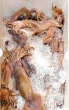 Los pescados del calamar o el sagittatus y el hielo europeos recién pescados de Todarodes en la caja en el contador en los pescad foto de archivo