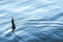 Los pescados del Grayling cogieron en un cebo Grayling del río en el gancho Pescador que sostiene cebo con los pescados del grayl imagenes de archivo