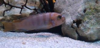 Los pescados del océano imágenes de archivo libres de regalías
