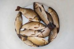 Los pescados en un cubo Foto de archivo