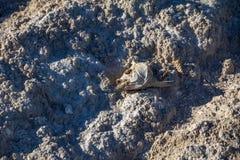 Los pescados esqueléticos dirigen en la superficie salada áspera del mar de Salton Fotos de archivo libres de regalías
